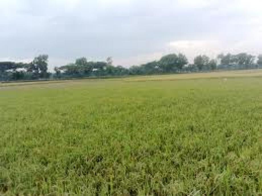 Jhenaidah Land Project